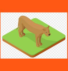 lioness isometric vector image
