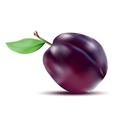 Realistic plum with stem and green leaf vector