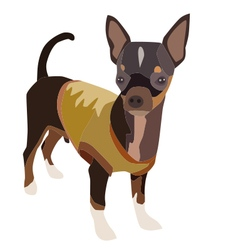 Chihuahua dog 1 vector