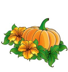 Pumpkin and flowers isolated vector