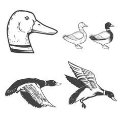 Set of wild ducks icons isolated on white vector