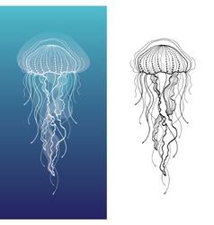 Jellyfish1 vector image