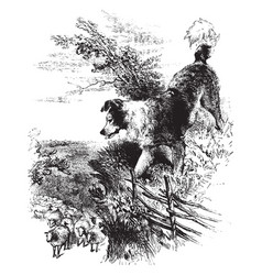 Sheep dog vintage vector