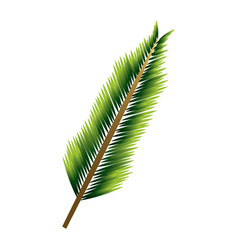 Green pine branch leaves natural foliage vector