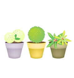 Trees and Plants in Terracotta Flower Pots vector image
