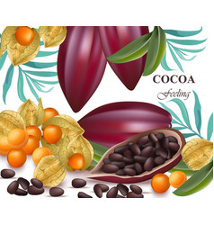 cocoa beans and gooseberry realistic detailed vector image