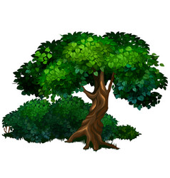 large tree oak nature forest ecology concept vector image