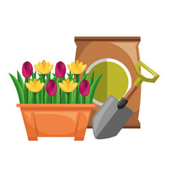 Beautiful flowers cultivated in pot with vector