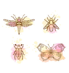 Insects line art set on white background vector