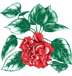 One rose vector image vector image