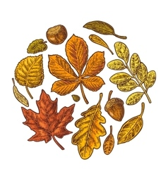 Set leaf and acorn vintage colorful vector image