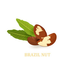 heap of brazil nuts with leaves for your design vector image vector image