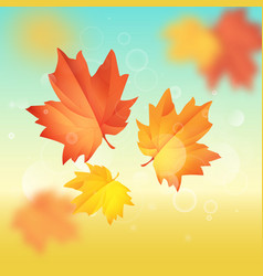 maple leaf hello autumn vector image