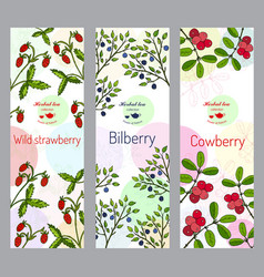 Herbal tea collection wild strawberry bilberry vector