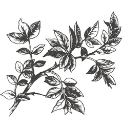 Roses leaves vector
