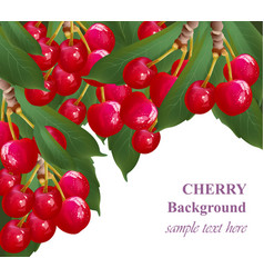 cherry fruits background growing branches vector image vector image