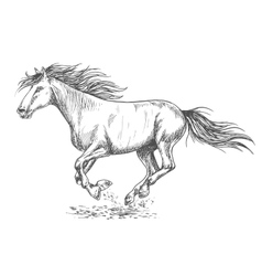 Rush running horse sketch portrait vector image