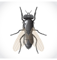 Detailed fly vector