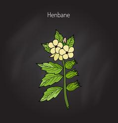 Black henbane or hyoscyamus niger vector