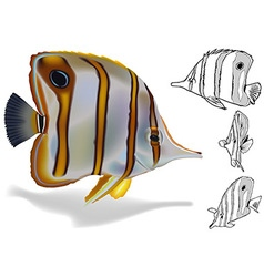 Copperband butterflyfish set vector