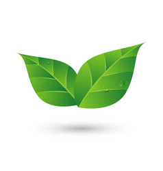 Green leaf with water drop eco friendly concept vector