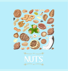isolated square of nuts and seeds vector image vector image
