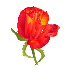 Orange rose flower vintage on a white background vector