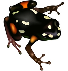 Poison Frog vector image