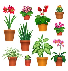 Room plants vector