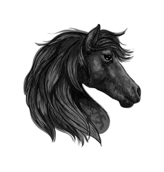Black horse head profile portrait vector
