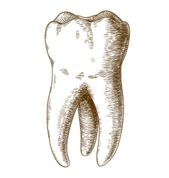 Engraving tooth vector