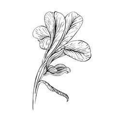 Iris flower ink sketch on white background vector