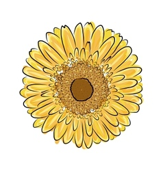 Sunflower sketch for your design vector