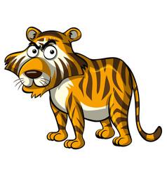 Wild tiger on white background vector