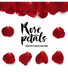 Realistic red rose petals set vector