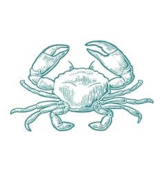 Crab isolated on white background vector