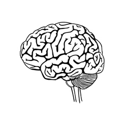 Brain outline vector