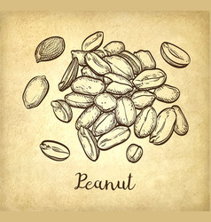 handful of peanut vector image vector image
