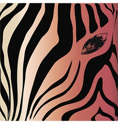 Zebra head and eye on a colored background vector image