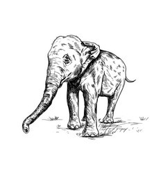 Old big elephant on the white background vector