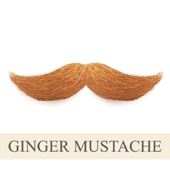 Realistic ginger vintage curly mustache vector image