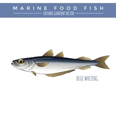Blue whiting marine food fish vector
