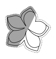 beautiful natural flower vector image vector image