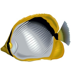 Butterflyfish vector