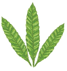 Unique style of fern leaves - scientific name vector