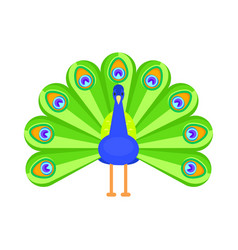 flat style of peacock vector image vector image