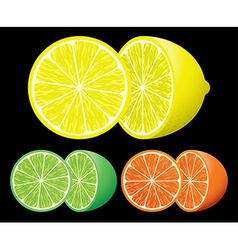 Set of citrus fruits vector
