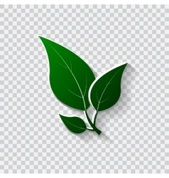 Green leaves Eco friendly vector image vector image