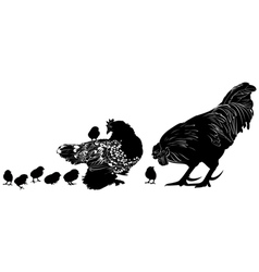 Hen and chicks cock vector
