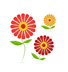Gerbera flowers vector